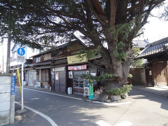 Yanaka: ヒマラヤ杉とみかどパン