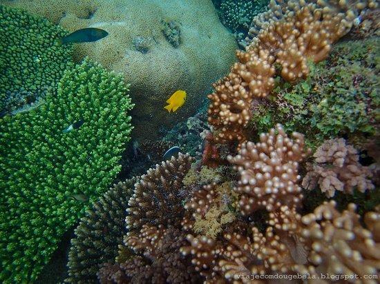 Diamonds Star of the East: More snorkel views
