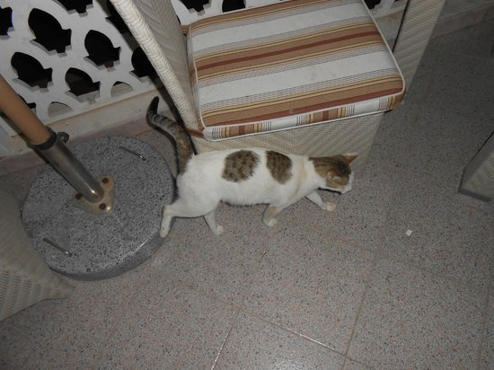 """Liwa Hotel : """"Two Spot"""" the pool area cat. Always meowing for free food. haha"""