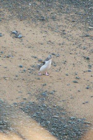 Bushy Beach: Solo on the beach
