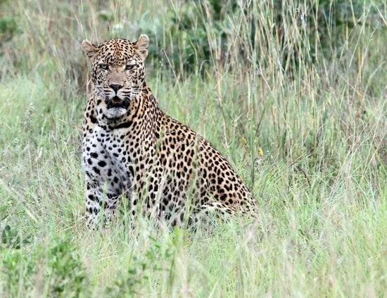 Ulusaba Rock Lodge : Local resident