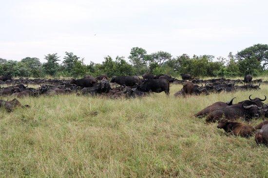 Ulusaba Rock Lodge: Local residents