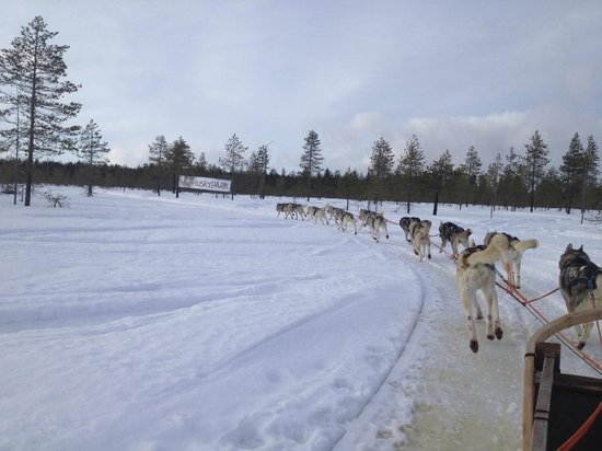 Santa Claus Holiday Village: dogs sleigh ride