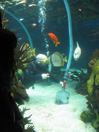 Lisbon Oceanarium : nettoyage