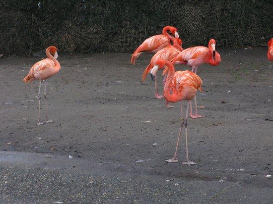 Antwerp Zoo (Dierentuin): В Зоопарке
