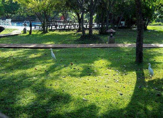 Kassapa Lions Rock: parc