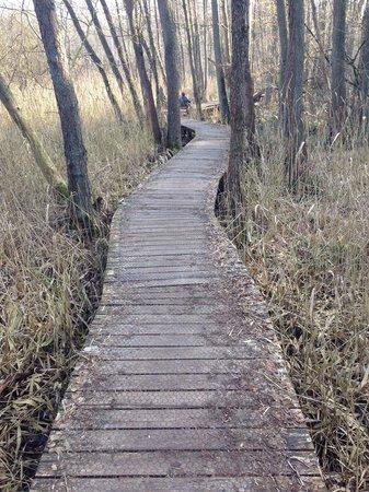 Boshotel Vlodrop: Vlonderpad Rode beek, bij Vlodrop station ( niet aangegeven wegens ecologisch kwetsbaar)