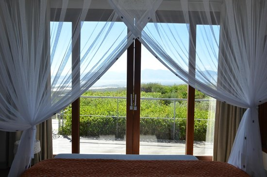 Grootbos Private Nature Reserve: View from bedroom