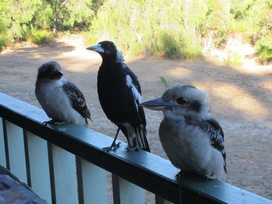 Yallingup Forest Resort : Visitors to the verandah