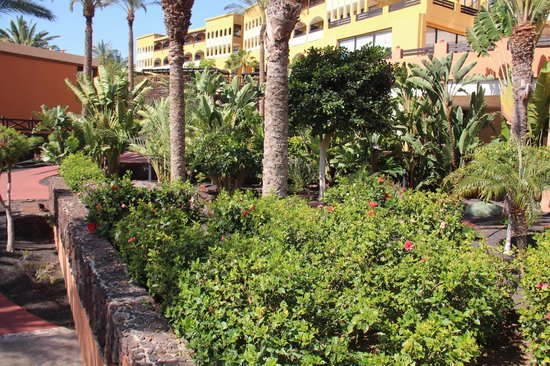Occidental Jandia Royal Level - Adults Only : GARDENS
