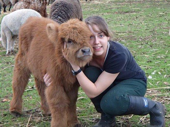 Denmark Animal Farm & Pentland Alpaca Stud