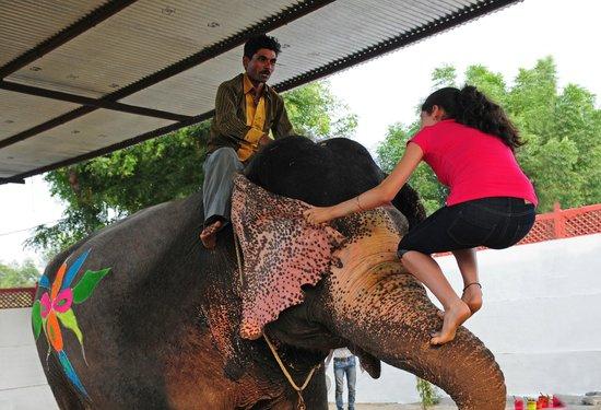 Elephant Voyage
