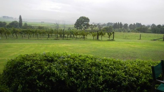 Tranquil Vale Vineyard: Hunter Valley