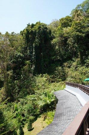 Krabi Cha-Da Resort: Рядом джунгли