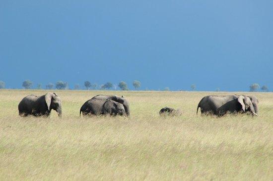 Okavango Delta: Elephant Parade