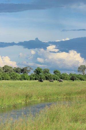 Okavango Delta: The beautiful Savuti Marsh