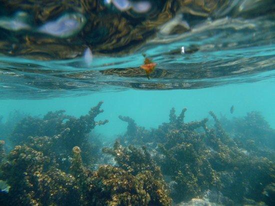 Ryanna Sun: snorkeling