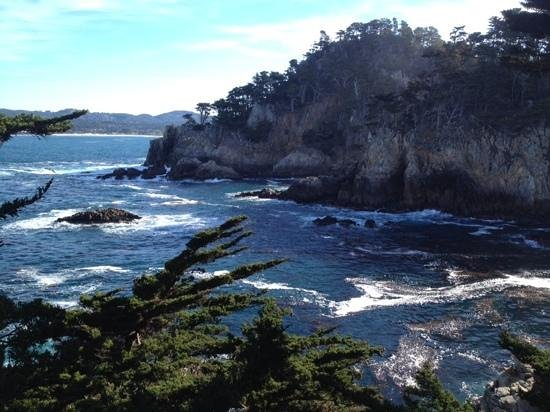 Point Lobos State Reserve: first trail we took, we new then we were in for a special day