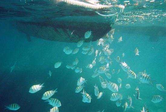Seahorse Sail and Snorkel Adventure: A school of fish by the catamaran...