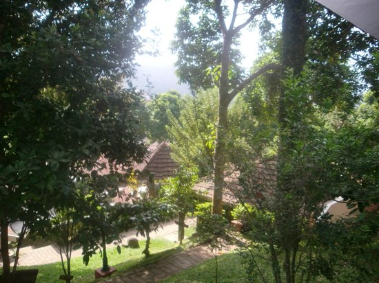 Cardamom County: view from the room