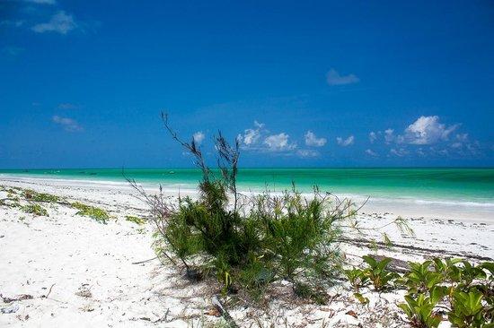 Arabian Nights Hotel : La spiaggia