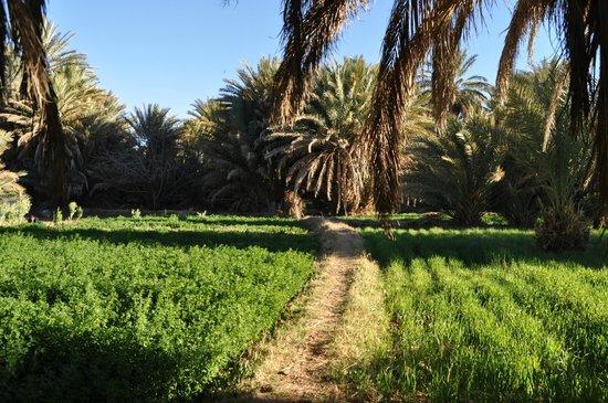 Maison Vallee Du Ziz: La palmeraie