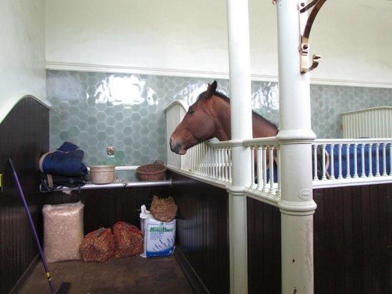 Royal Mews: Horses