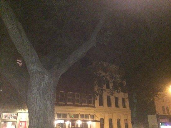 Southern Strolls Walking Tours: Hanging tree