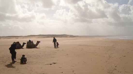 IndiGo Safari Morocco - Private Day Tours: camel trek tours in sahara erg chebbi