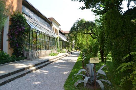 Orto Botanico di Padova : Una serra