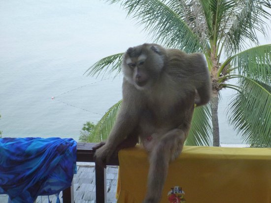 The Westin Siray Bay Resort & Spa Phuket: An early morning visitor to our balcony