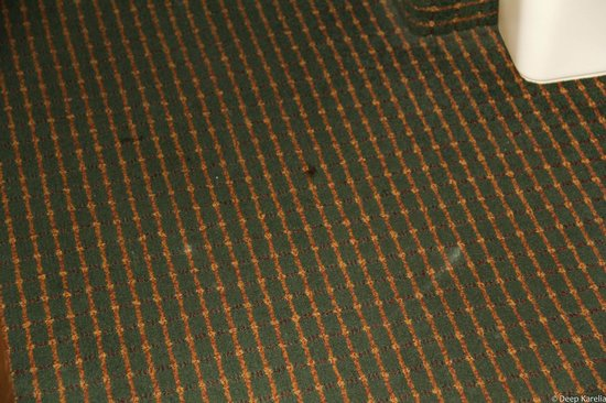 Comfort Inn: Carpet had stains, and smelled like old mold