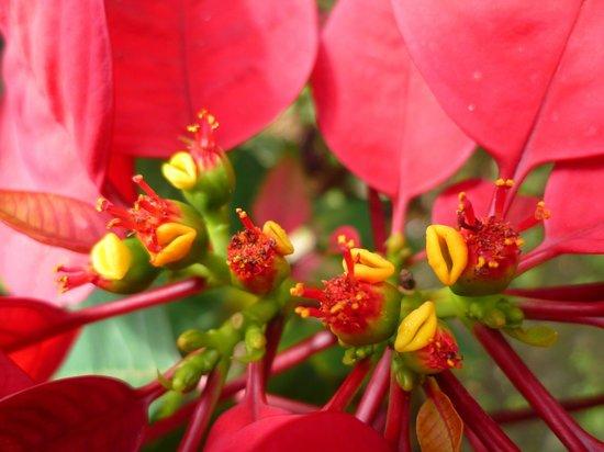 Epine du christ picture of jardin botanique de deshaies for Jardin 81