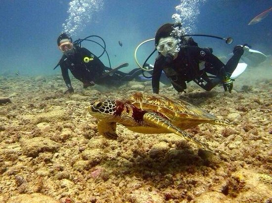 Grotto Snorkeling Sightseeing Day Tours - Sea Lovers: 憧れのウミガメ