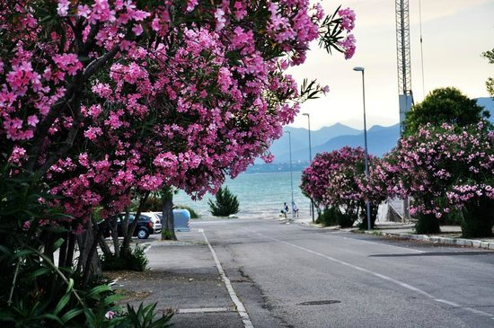 Hotel Residence Holiday: Road to the Garda Lake from the Hotel
