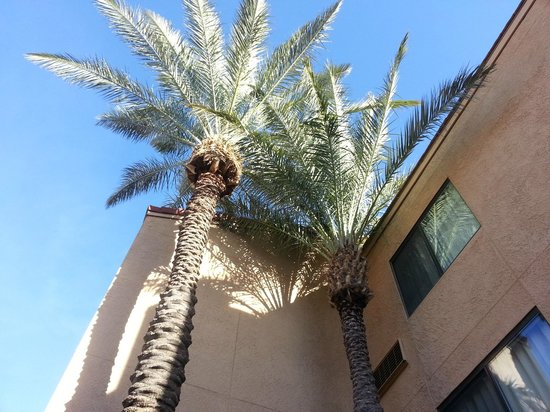Courtyard Tucson Airport: Palms