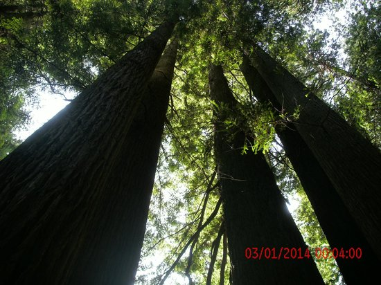 Trees of Mystery: on the trail