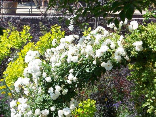 Getty Center : Fleurs