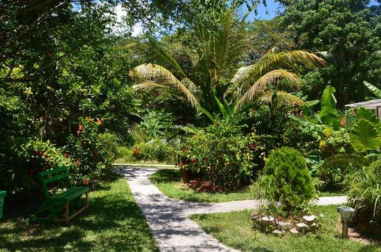 Buisson Guesthouse La Digue : Garden