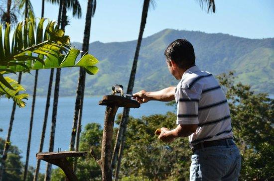 Villa Decary: Elkin feeding the Aracari