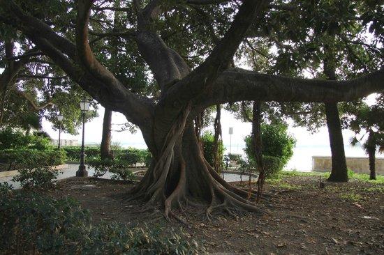 Fonte Aretusa : Дерево