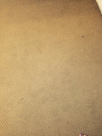 The Westin Cape Coral Resort At Marina Village: Filthy bedroom carpeting