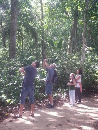 Playa Negra Guesthouse: Pierre shows us the Howler Monkeys in Cahuita National Park