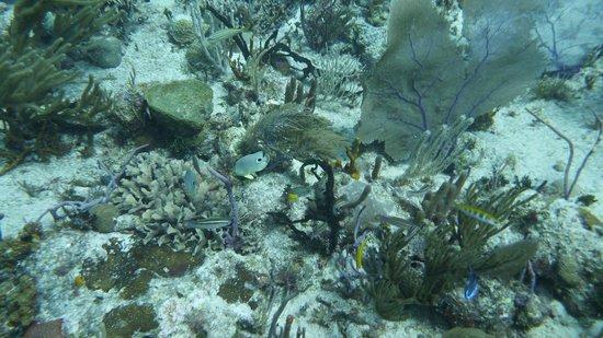 Dressel Divers: Scuba diving in Riviera Maya