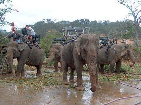Prenn Falls : elephants around the fall
