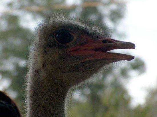 Prenn Falls : ostrich