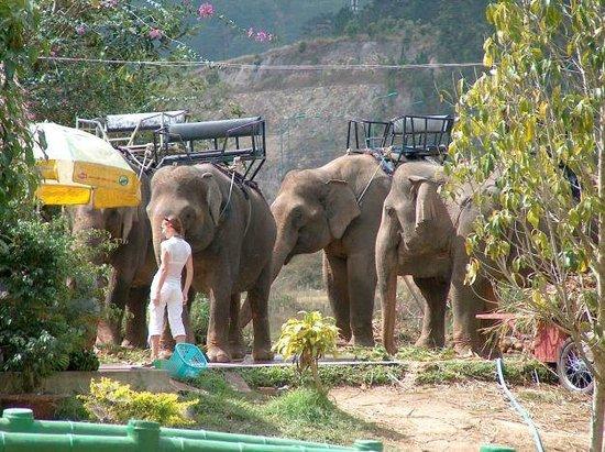 Prenn Falls : elephants