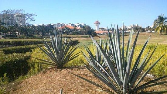 Marina Ixtapa Golf Course Restaurant: MARINA IXTAPA SKYLINE