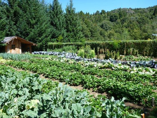 La Confluencia Lodge : Garden