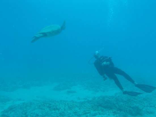 Reef Pirates Diving: Swimming with the sea turtles